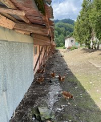 Farma v Sedliackej Dubovej